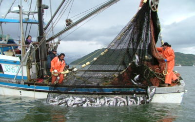 Diversifying fisheries portfolios stabilizes fishing communities