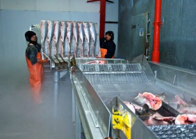 Processing salmon at Taku Fish Plant | Alaska Sea Grant