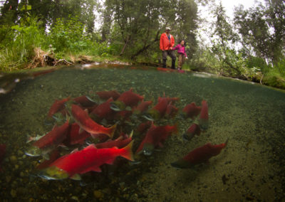Father and daughter observing sockeye | Jonny Armstrong