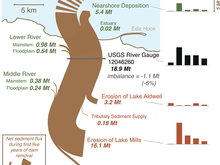 Morphodynamic evolution following sediment release from the world's largest dam removal