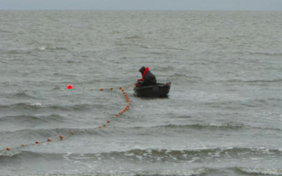 Evolving salmon use in the far north