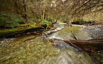 Effects of logging on salmon habitat may take decades to fully emerge